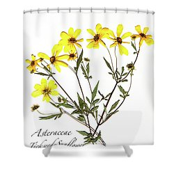 Tickseed Sunflower Shower Curtain