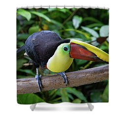 Tico Toucan Shower Curtain