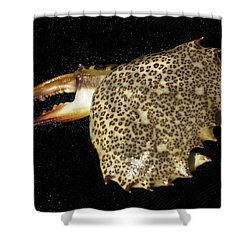 Tidal Monster Shower Curtain