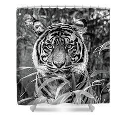 Tiger B/w Shower Curtain