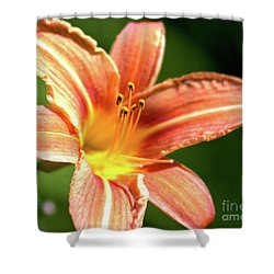 Shower Curtain featuring the photograph Tiger Bright by Baggieoldboy