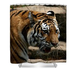 Shower Curtain featuring the photograph Serching by Cathy Harper
