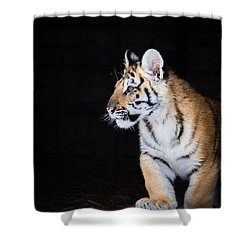 Shower Curtain featuring the photograph Tiger Cub by Serge Skiba