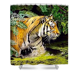 Tiger In The Sunderban Delta Shower Curtain
