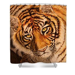 Shower Curtain featuring the drawing Tiger by Karen Ilari
