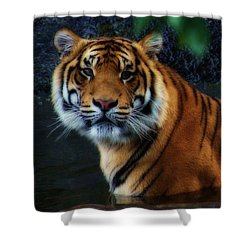Tiger Land Shower Curtain
