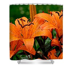 Tiger Lilies With Spring Shower Shower Curtain