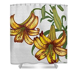 Tiger Lily Blossom  Shower Curtain by Walter Colvin