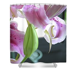 Tiger Lily Bud Shower Curtain