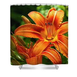 Tiger Lily Explosion Shower Curtain