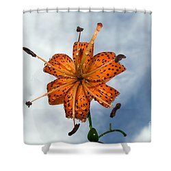 Tiger Lily In A Shower Shower Curtain by Kevin Fortier