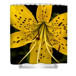 Shower Curtain featuring the photograph Tiger Lily by Jay Stockhaus