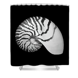 Tiger Nautilus Shell Shower Curtain by Jim Hughes