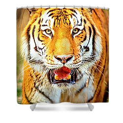 Tiger On The Hunt Shower Curtain by David Millenheft