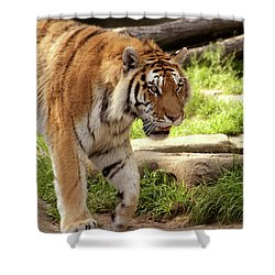 Tiger On The Hunt Shower Curtain by Gordon Dean II