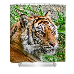 Tiger Portrait Shower Curtain by Jennie Marie Schell