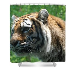 Shower Curtain featuring the photograph Tiger Profile by Richard Bryce and Family