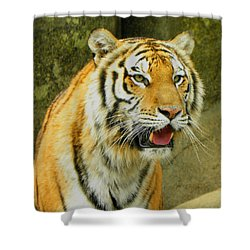 Shower Curtain featuring the photograph Tiger Stare by Sandi OReilly
