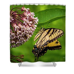 Tiger Swallowtail #210 Shower Curtain