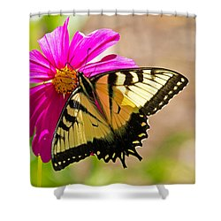 Tiger Swallowtail Butterfly. Shower Curtain by David Freuthal