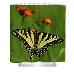 Tiger Swallowtail Butterfly Shower Curtain by Nancy Landry