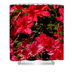Tiger Swallowtail On A Red Azalea Shower Curtain