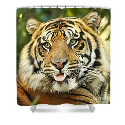 Tiger With Playful Expression Shower Curtain