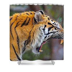 Tiger Yawn Shower Curtain