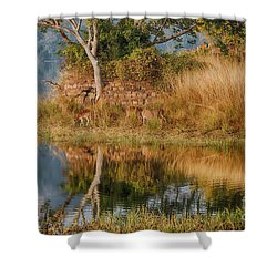 Tigerland Shower Curtain by Pravine Chester