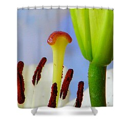 Tigerlily Close-up Shower Curtain by Ana Maria Edulescu