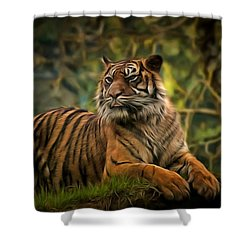 Shower Curtain featuring the photograph Tigers Beauty by Scott Carruthers