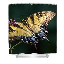 Shower Curtain featuring the photograph Tigress And Verbena by Byron Varvarigos