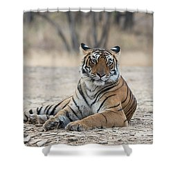 Tigress Arrowhead Shower Curtain