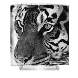Tigress In Black And White Shower Curtain by Kandy Hurley