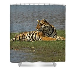 Tigress Shower Curtain