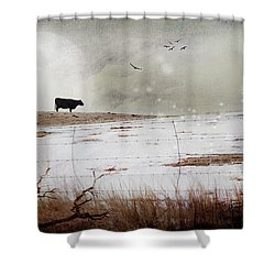 Shower Curtain featuring the photograph 'til The Cows Come Home by Theresa Tahara
