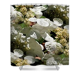 Tiled White Lace Cap Hydrangeas Shower Curtain