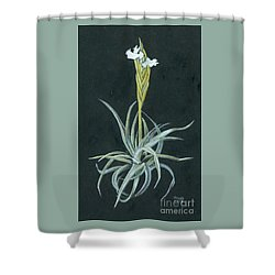 Tillandsia Diaguitensis Shower Curtain