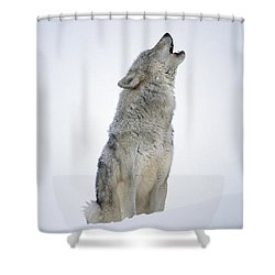 Shower Curtain featuring the photograph Timber Wolf Portrait Howling In Snow by Tim Fitzharris