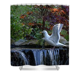 Time For A Bird Bath Shower Curtain