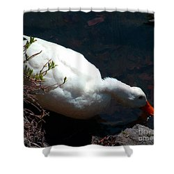 Time For A Drink Shower Curtain by RC DeWinter
