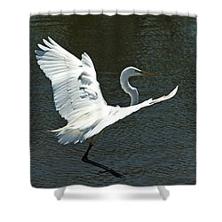 Time To Land Shower Curtain by Carolyn Marshall