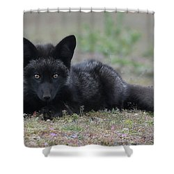Shower Curtain featuring the photograph Here's Looking At You by Elvira Butler