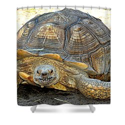 Timothy The Giant Tortoise Shower Curtain