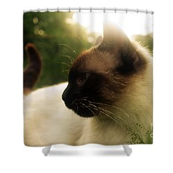 Tingsha Sun Shower Curtain