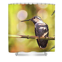 Tiny Bird Upon A Branch Shower Curtain