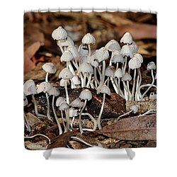 Shower Curtain featuring the photograph Tiny Corrugated Fungi By Kaye Menner by Kaye Menner
