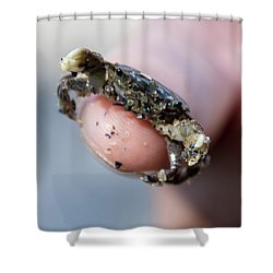 Tiny Crab Shower Curtain