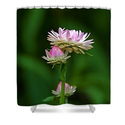 Shower Curtain featuring the photograph Tiny Dahlias Green Aura by Byron Varvarigos