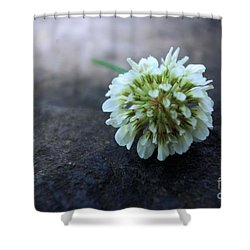 Tiny Details  Shower Curtain by John S